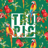 Vintage Pomegranates, Flowers and Parrot Birds Royalty Free Stock Image