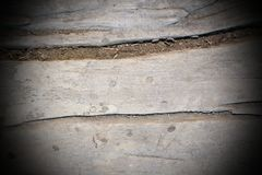 Vintage poplar wood texture Royalty Free Stock Photo