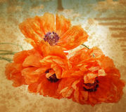 Vintage poppies Stock Photos
