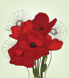 Vintage poppies composition Stock Images