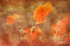 Vintage poppies decoration, grunge background. Vintage poppies decoration pasted on a grunge background stock images