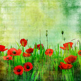Vintage poppy field. Vintage green field with poppy flowers Stock Images