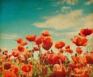 Poppy field against blue sky. Vintage poppy field against blue sky. Paper texture Stock Image