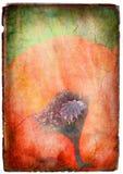 Vintage Poppy Flower Stock Photography