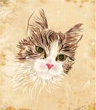 Vintage portrait of the cat Stock Image