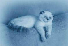 Dreaming little kitten lying on the sofa Royalty Free Stock Photo