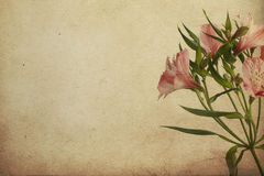 Vintage postcard with Alstroemeria Royalty Free Stock Photos
