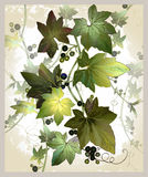 Vintage postcard with ivy and berries. Illustration the curling Stock Photos