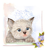 Vintage postcard with kitten. Stock Images