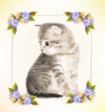 Vintage postcard with kitten. Royalty Free Stock Photos