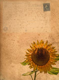 Vintage postcard and sunflower photograph Stock Photo
