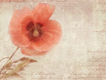 Vintage postcard template with poppy flower on shabby paper. stock images