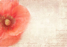 Vintage postcard template with poppy flower on shabby paper. royalty free stock images