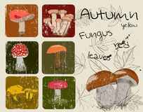 Vintage poster with autumn plants and fungis. Stock Photos