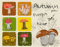 Vintage poster with autumn plants and fungis. Stock Images