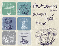Vintage poster with autumn plants and fungus. Stock Images