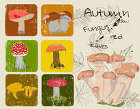 Vintage poster with autumn plants and fungus. Stock Image
