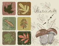 Vintage poster with autumn plants Stock Image
