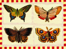 Vintage poster: butterflies Stock Photography