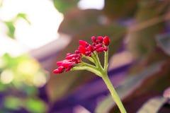 Vintage pouca cor pastel vermelha da flor ao teste padrão criativo imagem de stock
