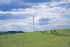 Vintage power pole in wheat field. Wheat field still green with a vintage power pole and cloudy sky Stock Image