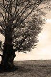 Vintage que olha a árvore Foto de Stock Royalty Free