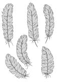 vintage quill feathers set Stock Images