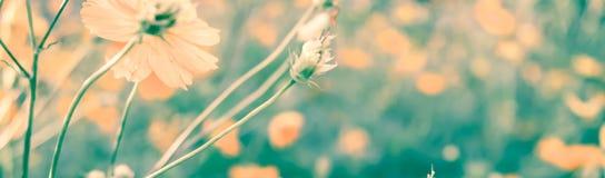 Vintage rétro de la fleur dans la couleur douce et le style trouble Images libres de droits