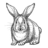 Vintage rabbit sketch. Rabbit sketch. Vector hand drawn wild rabbit isolated on white background, vintage hare or bunny black drawing stock illustration