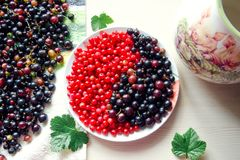 red and black currants. The concept of Yin and Yan stock image