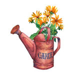 Vintage red garden watering can with a bouquet of yellow flowers. Royalty Free Stock Photography
