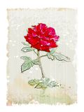 Vintage red rose Royalty Free Stock Photos