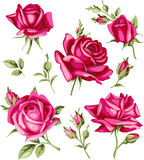 Vintage red rose and bud set. Vector flowers Royalty Free Stock Photo