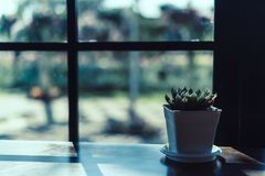 Vintage retro color tone Small succulent and cactus on wood table beside window stock photo