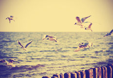 Vintage retro filtered birds on the sea. Vintage retro filtered birds on the sea, nature background, old film effect Royalty Free Stock Photos