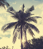 Vintage retro filtered picture of palm tree at sunset Stock Image