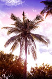 Vintage retro filtered picture of palm tree at sunset Royalty Free Stock Photos