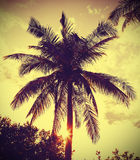 Vintage retro filtered picture of palm tree at sunset Stock Images