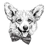 Vintage retro hipster style sketch of funny Pembroke Welsh corgi dog. Royalty Free Stock Images
