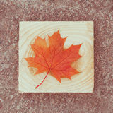 Vintage retro leafy background Stock Image