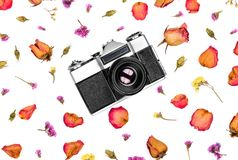 Vintage retro photo camera and dried flowers isolated on white background. Flat lay, top view Stock Photos