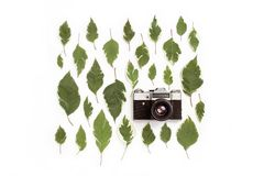 Vintage retro photo camera and green leaves pattern Stock Images