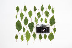 Vintage retro photo camera and green leaves pattern on white Stock Photos