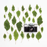 Vintage retro photo camera and green leaves pattern on white Royalty Free Stock Photography