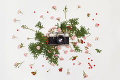 Vintage retro photo camera, pink roses the fairy, Cotoneaster. Horizontal red berries and Thuja occidentalis Danica evergreen plants on white background. flat Stock Photos