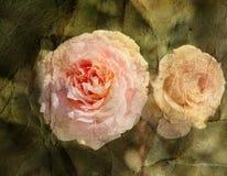 Vintage retro rose Stock Images