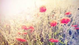 Vintage retro style poppy flowers background, shallow depth of f Stock Image
