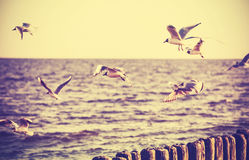 Vintage retro stylized photo of birds on the sea. Stock Images