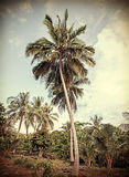 Vintage retro stylized tropical nature background with palm tree Stock Photography