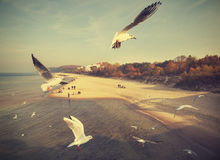 Vintage retro stylzied birds above a beach. Vintage retro stylzied birds above a beach, Baltic Sea, Poland Stock Image